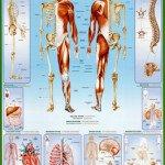 SPC007_Human_Body
